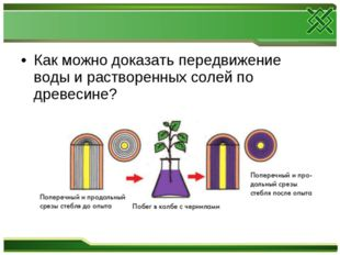 Как можно доказать передвижение воды и растворенных солей по древесине?