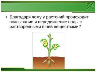 Благодаря чему у растений происходит всасывание и передвижение воды с раствор