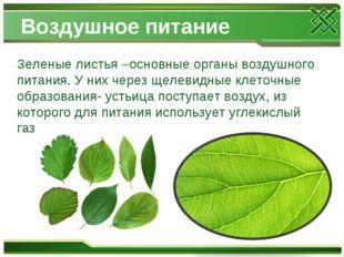 Воздушное питание Зеленые листья –основные органы воздушного питания. У них ч
