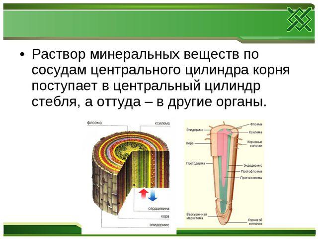 Раствор минеральных веществ по сосудам центрального цилиндра корня поступает...