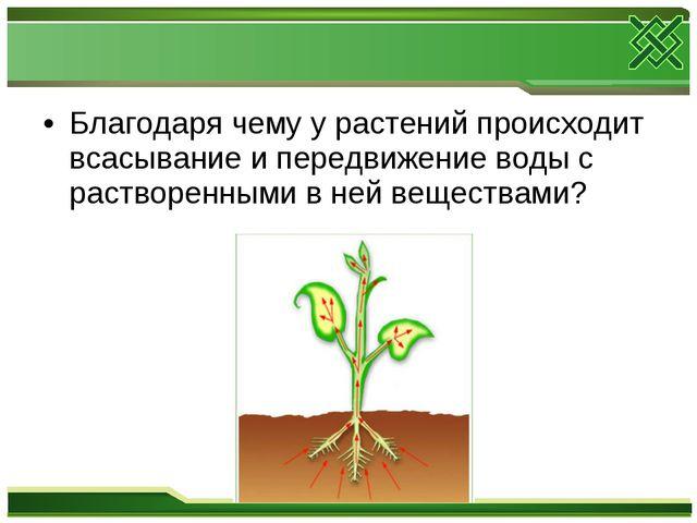 Благодаря чему у растений происходит всасывание и передвижение воды с раствор...