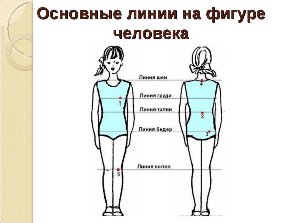 Основные линии на фигуре человека