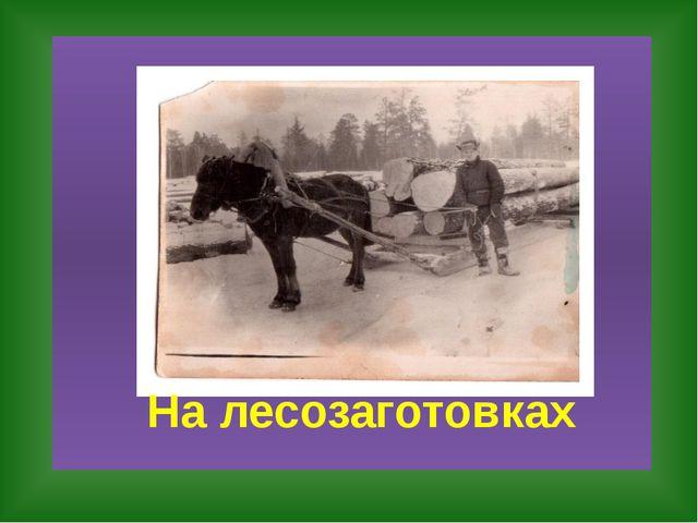 На лесозаготовках