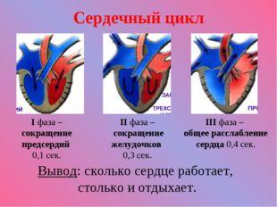 Сердечный цикл I фаза – сокращение предсердий 0,1 сек. II фаза – сокращение ж