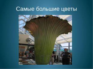 Самые большие цветы