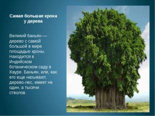 Самая большая крона у дерева Великий баньян — дерево с самой большой в мире п