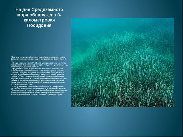 На дне Средиземного моря обнаружена 8-километровая Посидония Испанские океан...