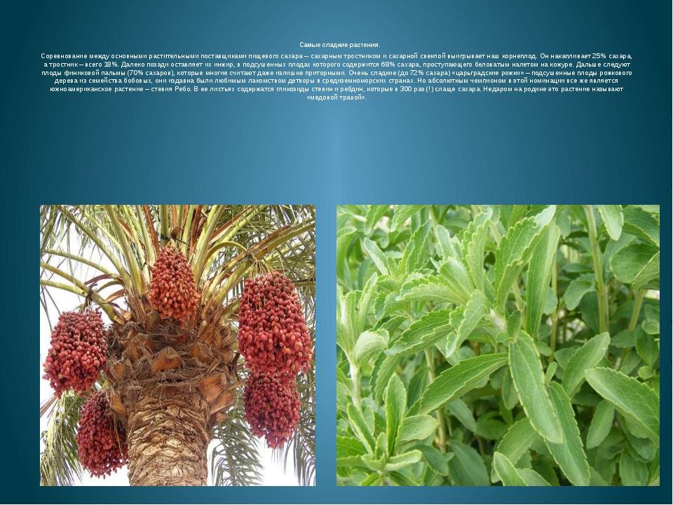 Самые сладкие растения. Соревнование между основными растительными поставщик...