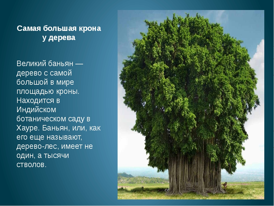 Где находится большие деревья