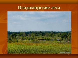 Владимирские леса