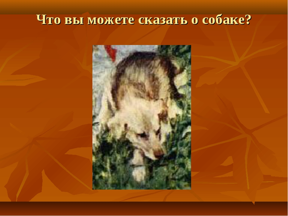 Что вы можете сказать о собаке?