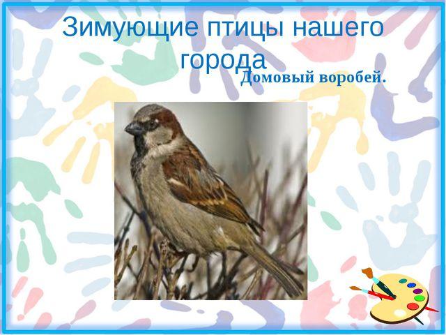 Зимующие птицы нашего города Домовый воробей.