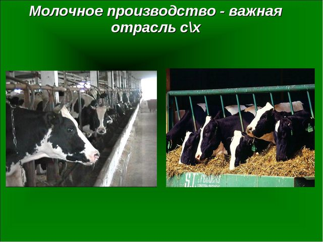 Молочное производство - важная отрасль с\х