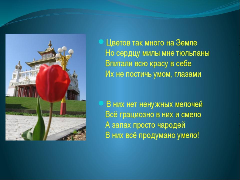 Цветов так много на Земле Но сердцу милы мне тюльпаны Впитали всю красу в себ...