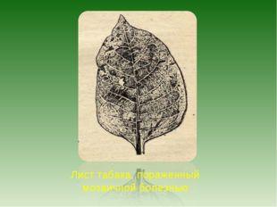 Лист табака, пораженный мозаичной болезнью