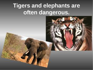 Tigers and elephants are often dangerous.