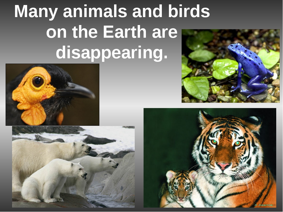 Many animals and birds on the Earth are disappearing.