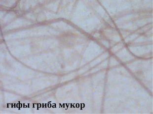 гифы гриба мукор