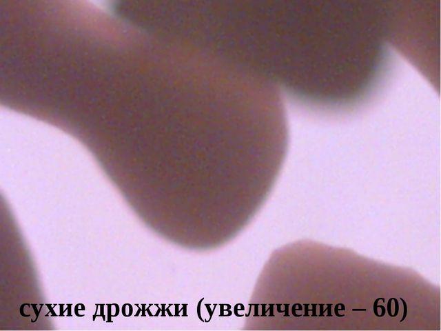 сухие дрожжи (увеличение – 60)