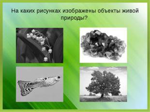 На каких рисунках изображены объекты живой природы?