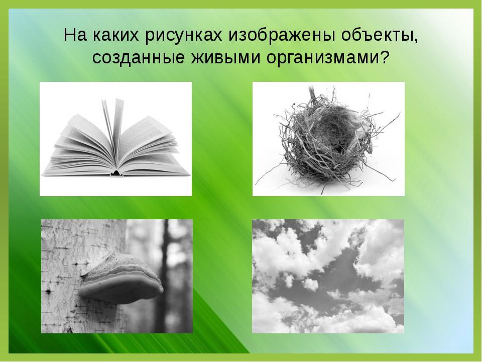 На каких рисунках изображены объекты, созданные живыми организмами?