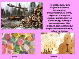 Из древесины ели вырабатывают целлюлозу, искусственный шелк, чернило, глицер