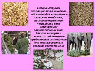 Еловые стружки используются в качестве подстилки для животных в сельском хоз