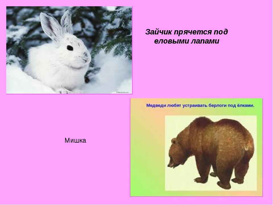 Зайчик прячется под еловыми лапами Мишка
