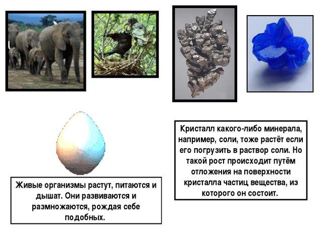 Живые организмы растут, питаются и дышат. Они развиваются и размножаются, ро...