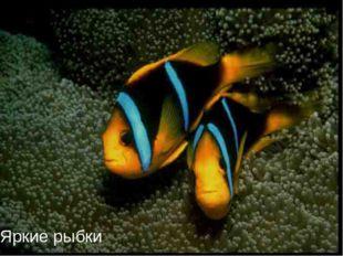 Яркие рыбки
