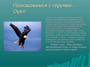 Познакомимся с героями… Орел Орлы это хищные птицы, которые имеют замечательн
