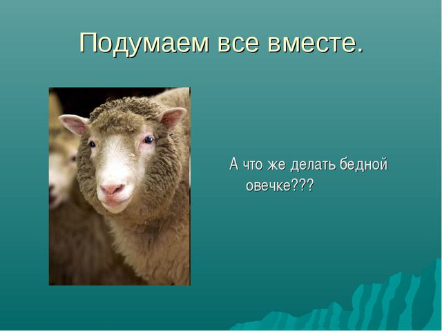 Подумаем все вместе. А что же делать бедной овечке???