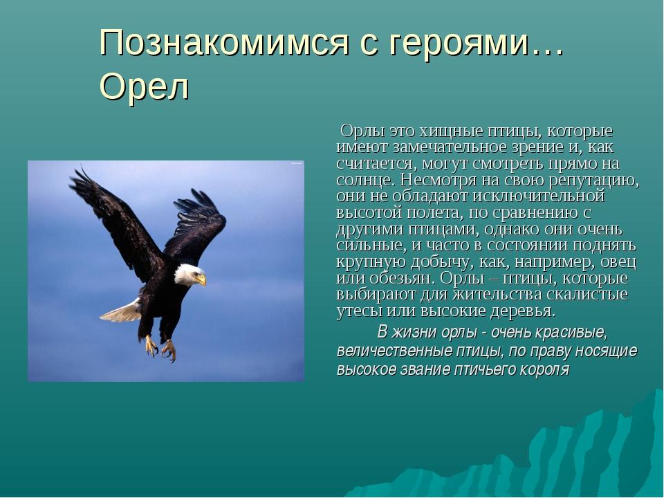 Познакомимся с героями… Орел Орлы это хищные птицы, которые имеют замечательн...