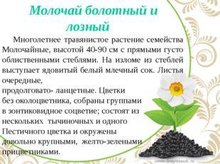 Молочай болотный и лозный Многолетнее травянистое растение семейства Молоча