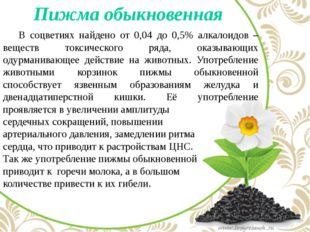 Пижма обыкновенная В соцветиях найдено от 0,04 до 0,5% алкалоидов – веществ