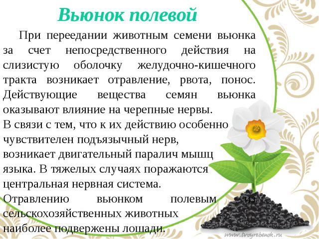 Вьюнок полевой  При переедании животным семени вьюнка за счет непосредстве...
