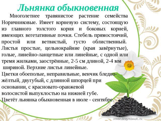 Льнянка обыкновенная Многолетнее травянистое растение семейства Норичниковы...