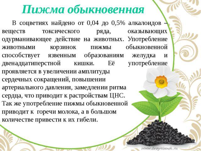 Пижма обыкновенная В соцветиях найдено от 0,04 до 0,5% алкалоидов – веществ...