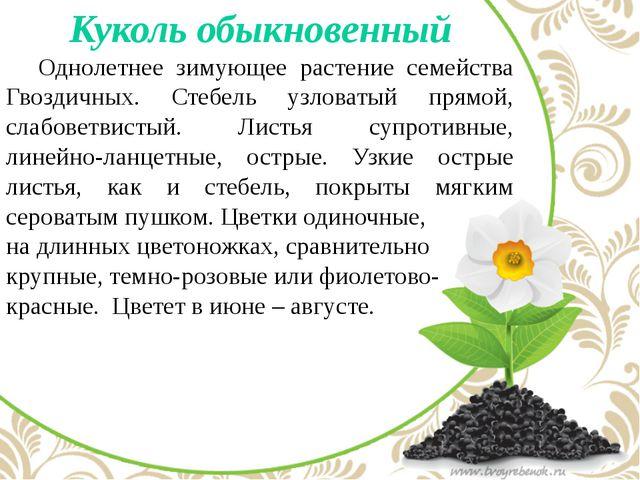 Куколь обыкновенный Однолетнее зимующее растение семейства Гвоздичных. Стеб...