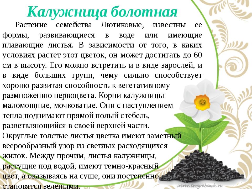 Калужница болотная Растение семейства Лютиковые, известны ее формы, развива...