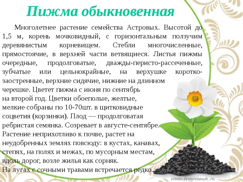 Пижма обыкновенная Многолетнее растение семейства Астровых. Высотой до 1,5...