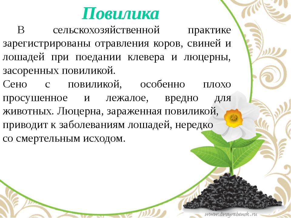 Повилика  В сельскохозяйственной практике зарегистрированы отравления коро...