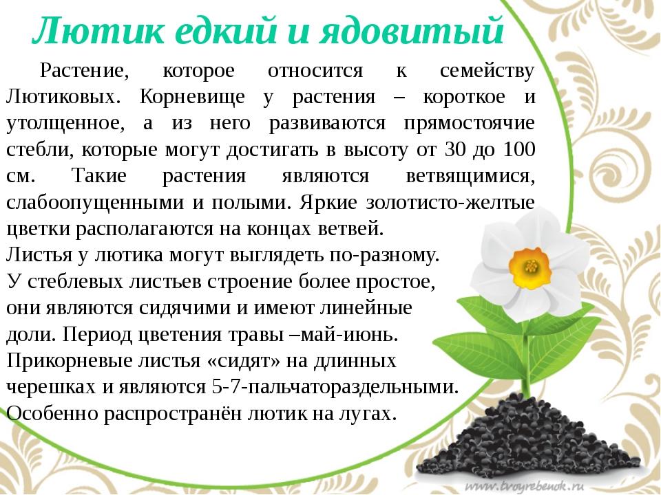 Лютик едкий и ядовитый Растение, которое относится к семейству Лютиковых. К...