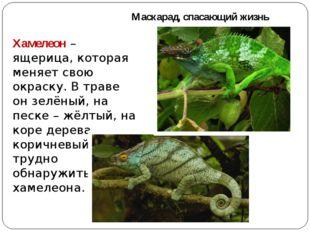 Маскарад, спасающий жизнь Хамелеон – ящерица, которая меняет свою окраску. В