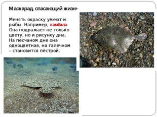 Маскарад, спасающий жизнь Менять окраску умеют и рыбы. Например, камбала. Она