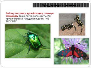 Предупреждающая окраска Бабочку пестрянку, жука бронзовку, огненную саламандр