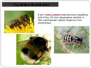 Предупреждающая окраска А вот пчёлы, шмели и осы вполне съедобны для птиц. Но
