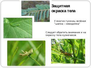 """Защитная окраска тела У многих гусениц зелёная """"шапка – невидимка"""" Следует об"""