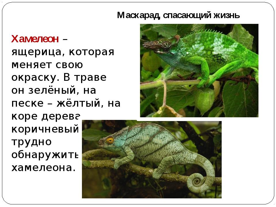 Маскарад, спасающий жизнь Хамелеон – ящерица, которая меняет свою окраску. В...