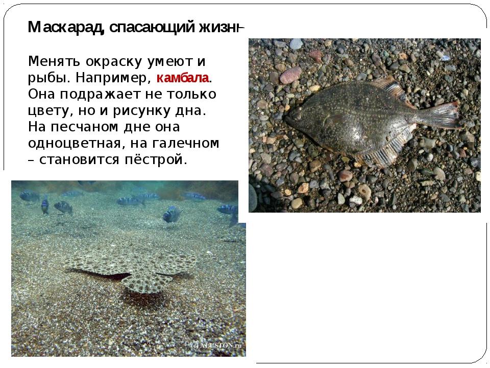 Маскарад, спасающий жизнь Менять окраску умеют и рыбы. Например, камбала. Она...